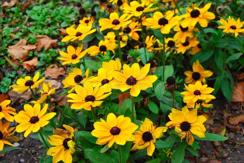 Żółci jesień kwiaty zdjęcie stock