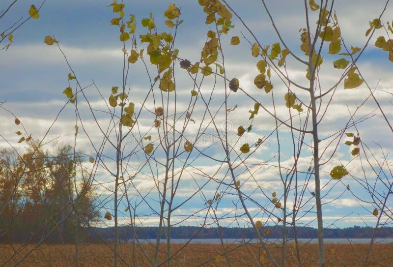 Żółci jesień liście znika od rośliny melancholicznego stroskania rozpaczają błękity zdjęcia stock