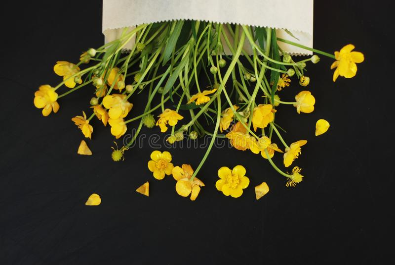 Żółci Mali kwiaty w Kopertowej Czarnej tła mieszkania Lay kopii przestrzeni zdjęcia stock