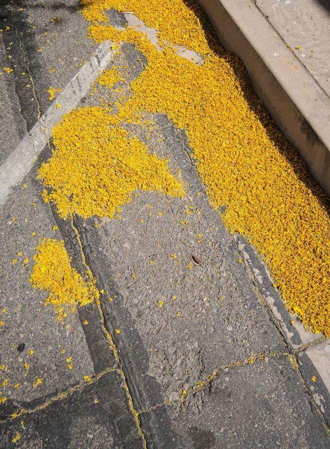 Żółci Palo Verde okwitnięcia zdjęcie royalty free