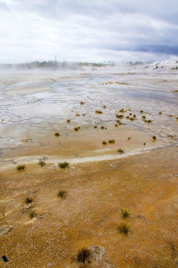 Żółci thermophilic mikroorganizmy i żałośnie kępy trawa obrazy stock