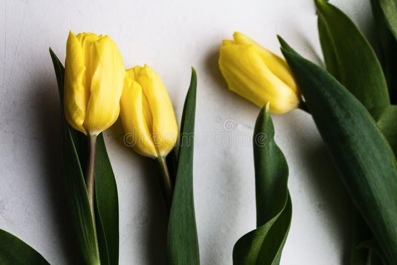 Żółci tulipany obraz royalty free
