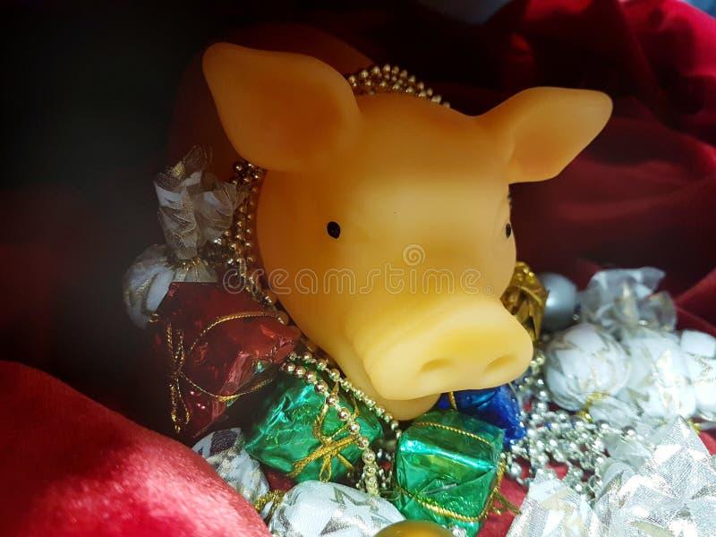 Żółta świnia fotografia royalty free