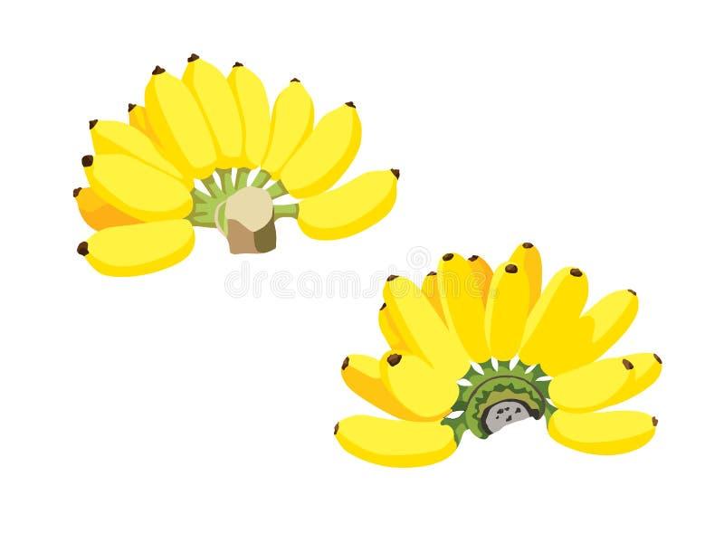 Żółta bananowa owoc i dojrzali banany piękni jeść royalty ilustracja