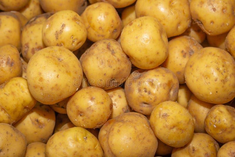 Żółta creole grula dla sprzedaży zdjęcie stock