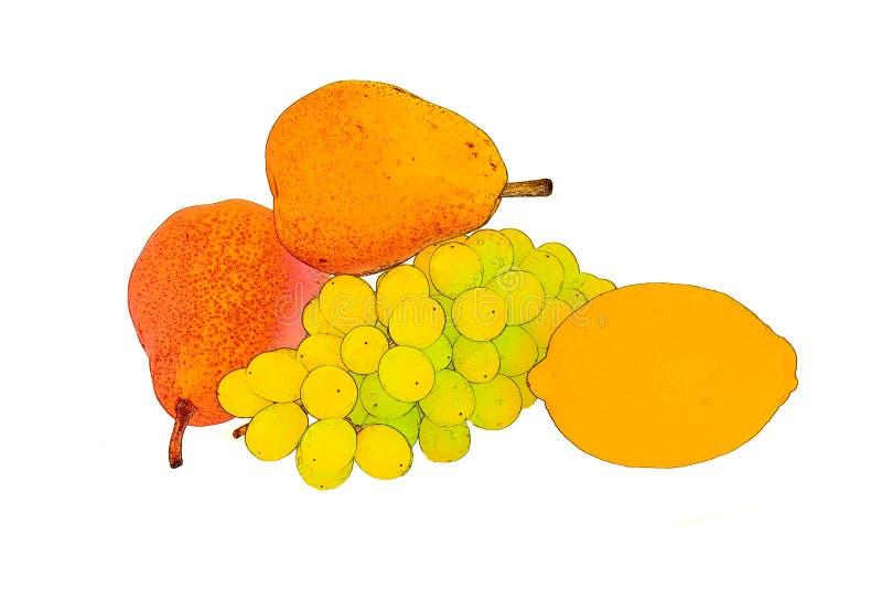 Żółta cytryna z parą jaskrawe czerwone bonkrety i gałązka z zielonymi winogronami fotografia stock