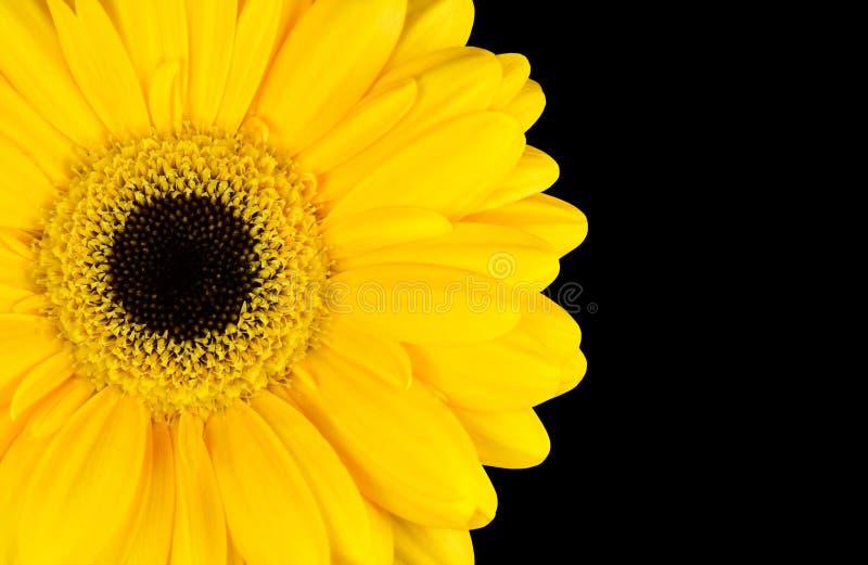 Download Żółta Nagietka Kwiatu Część Odizolowywająca Na Czerni Obraz Stock - Obraz złożonej z tło, piękno: 28973513