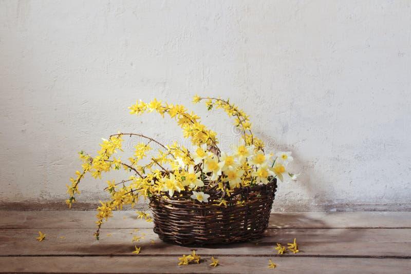 Żółta wiosna kwitnie w koszu na tło starej ścianie zdjęcia royalty free