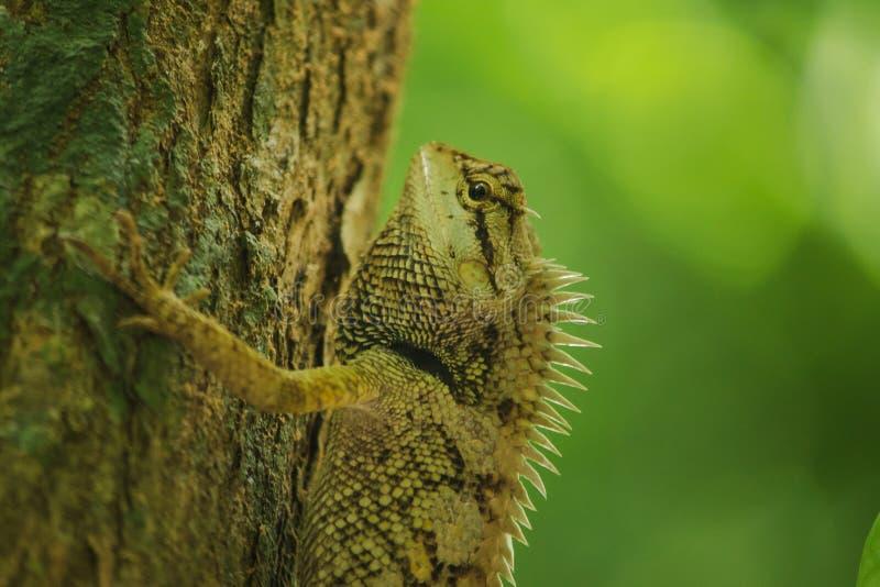 Żółte jaszczurki na drzewach w naturze zdjęcie royalty free