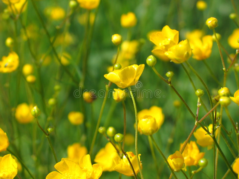 żółte kwiaty obrazy stock