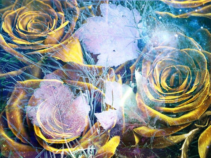 Żółte róże royalty ilustracja
