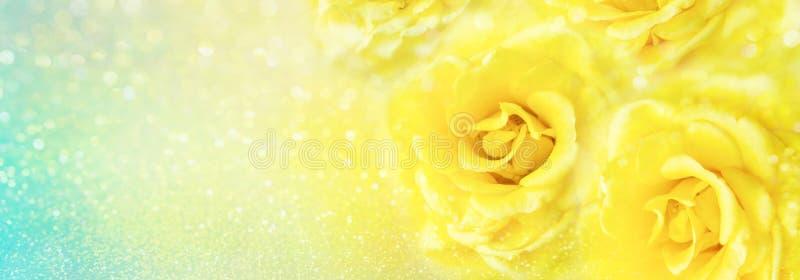 Żółte róże kwitną miękkiego romansowego tło z piękną błyskotliwością zdjęcie stock