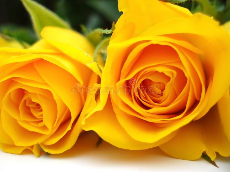 żółte róże wiązek zdjęcia stock