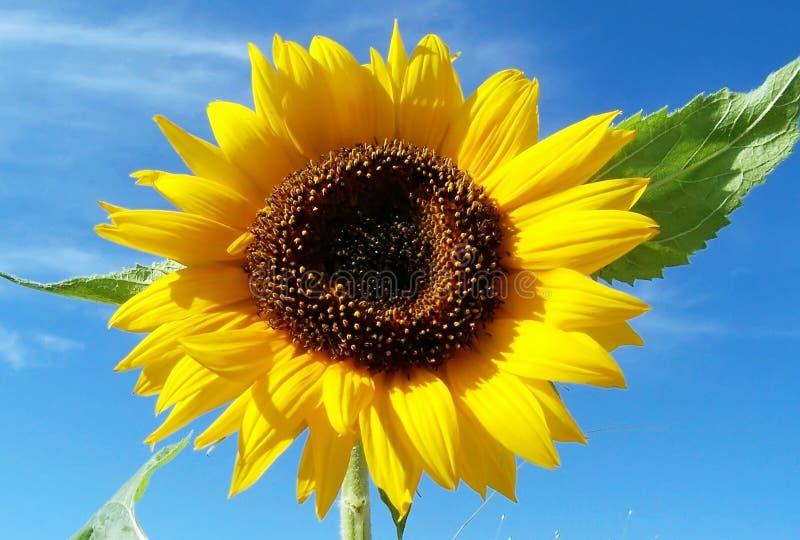 Żółte słońce zdjęcia stock