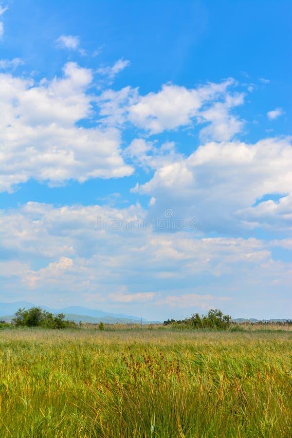 Żółte trawy, chmury i niebo, fotografia stock