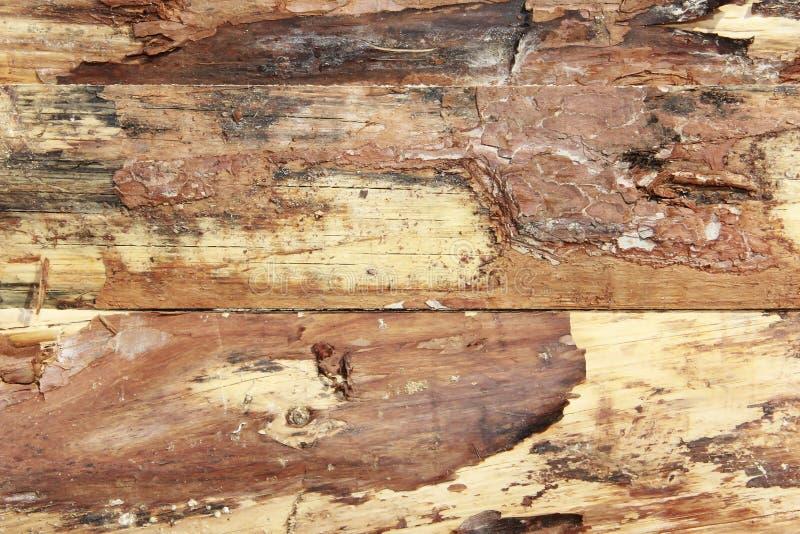 Żółtego brązu drewnianej deski tekstura z pęknięciami, plamami i narysami, obraz stock