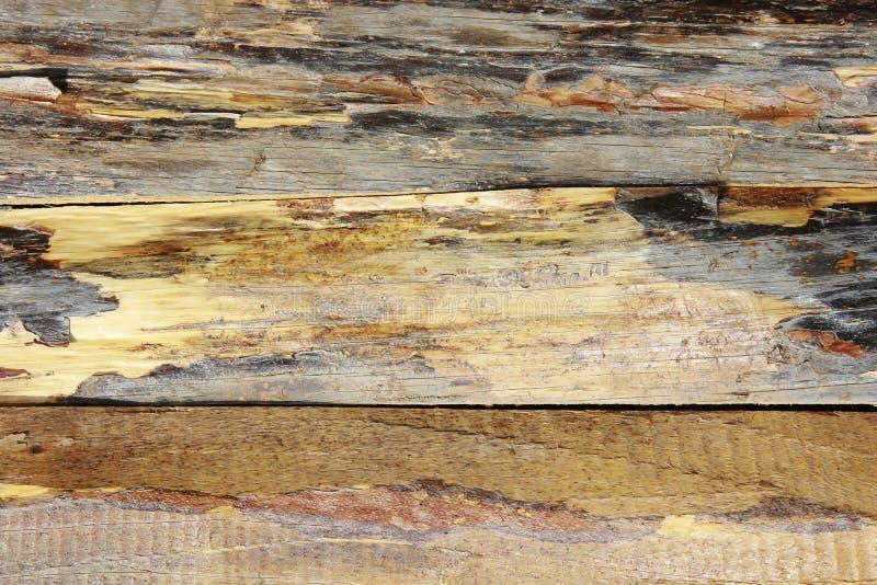 Żółtego brązu drewnianej deski tekstura z pęknięciami, plamami i narysami, fotografia royalty free