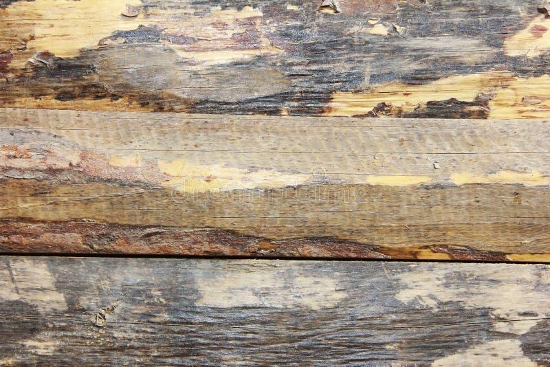 Żółtego brązu drewnianej deski tekstura z pęknięciami, plamami i narysami, zdjęcie stock
