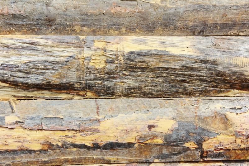 Żółtego brązu drewnianej deski tekstura z pęknięciami, plamami i narysami, zdjęcia royalty free