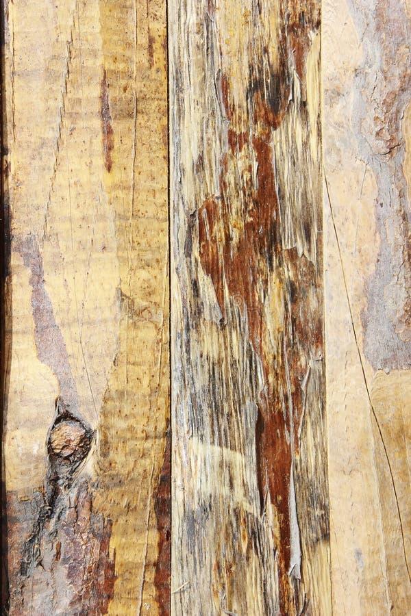 Żółtego brązu drewnianej deski tekstura z pęknięciami, plamami i narysami, obrazy royalty free