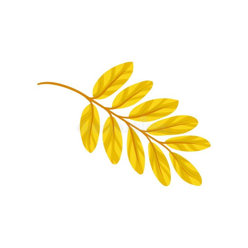 Żółtego jesieni aronia liścia wektorowa ilustracja na białym tle ilustracji