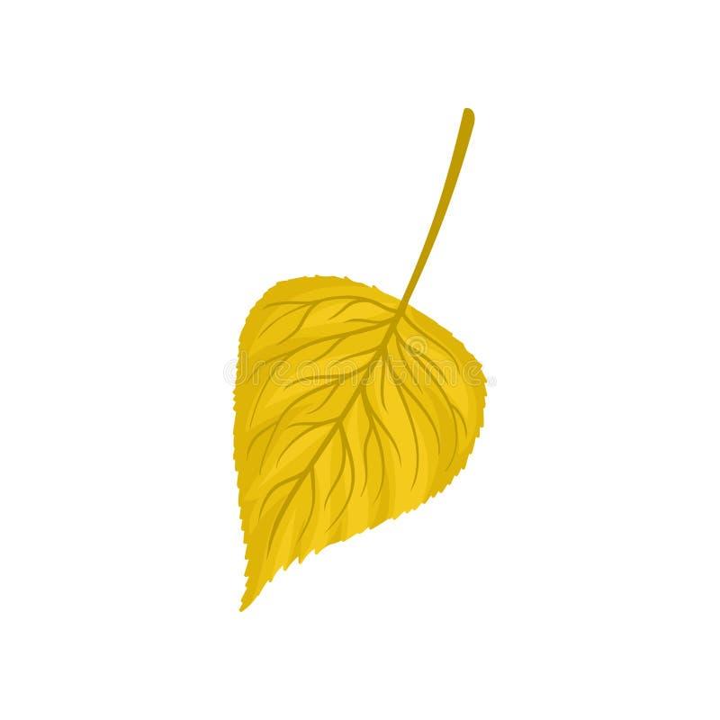 Żółtego jesieni brzozy liścia wektorowa ilustracja na białym tle ilustracja wektor