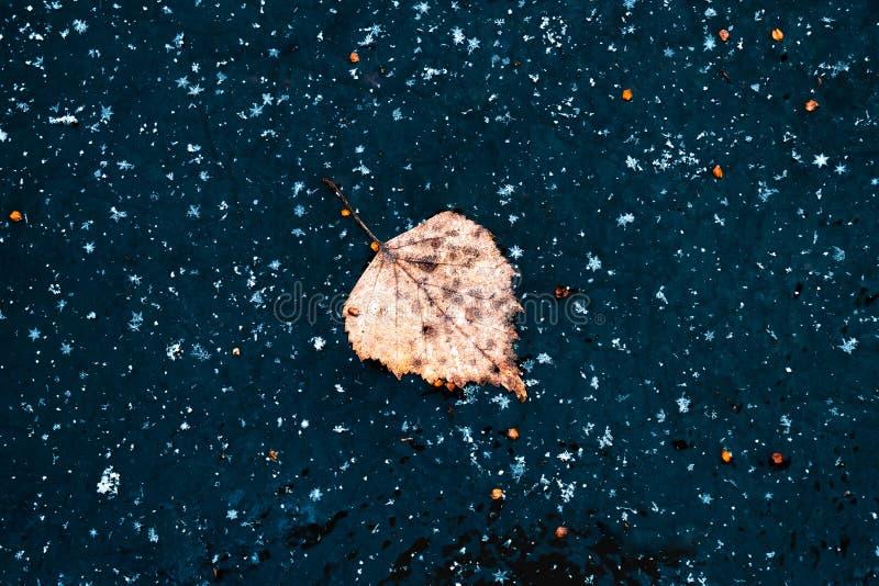 Żółty brzozowy liść zamrożony w niebieskim lodzie obraz royalty free