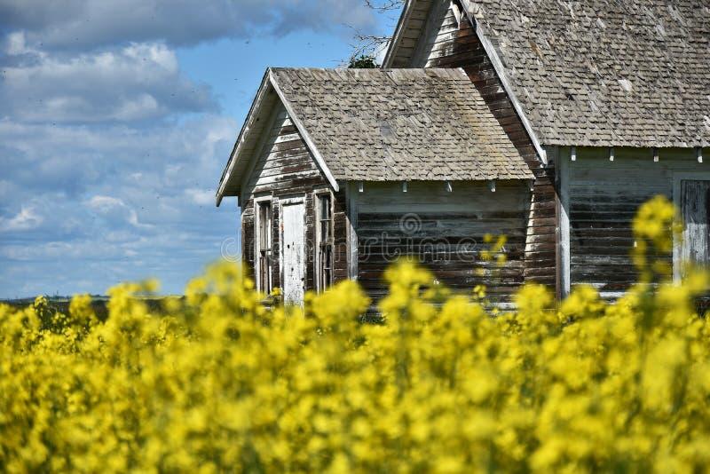 Żółty Canola pole i bieg puszka dom wiejski fotografia stock