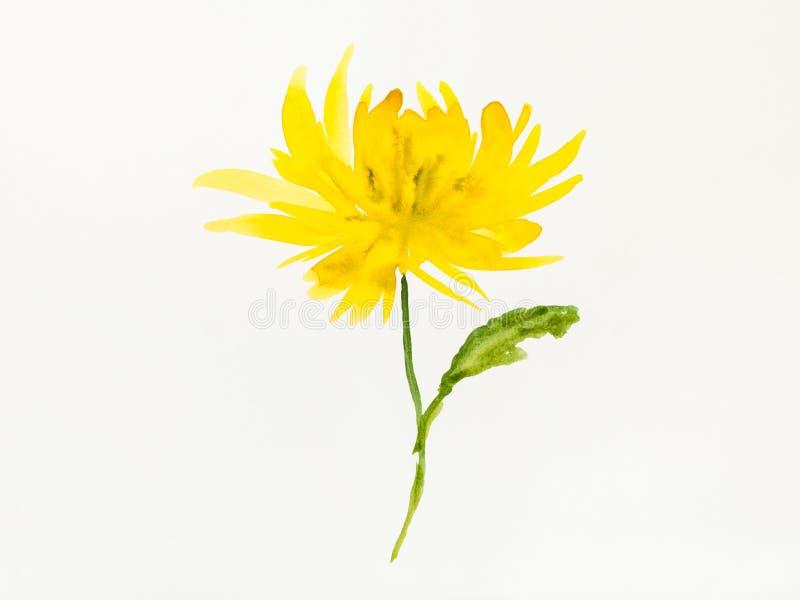 Żółty chryzantema kwiat jest ręką rysującym na papierze royalty ilustracja