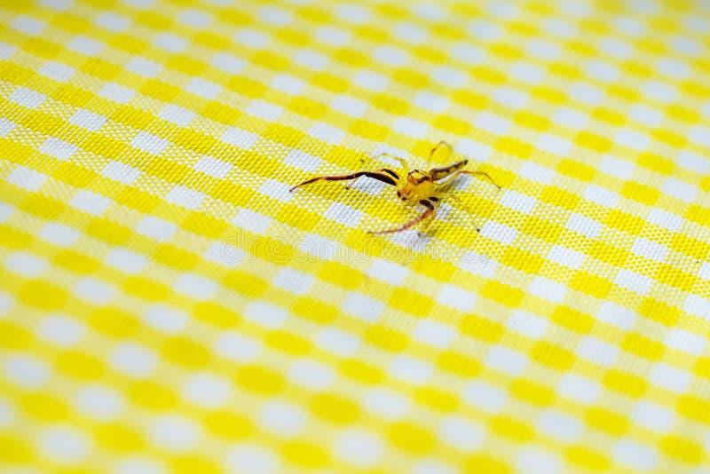 Żółty czerwony półprzezroczysty pająk na żółtego caro stołowym płótnie, Bohol, Filipiny zdjęcia stock