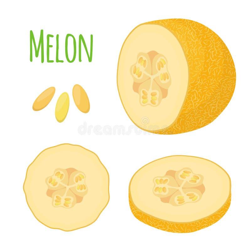 Żółty dojrzały melon Organicznie świeża owoc Kreskówki mieszkania styl wektor royalty ilustracja