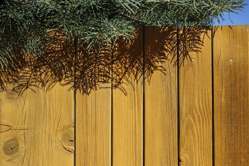 Żółty drewniany ogrodzenie i zielony jedlinowy drzewo zdjęcia stock