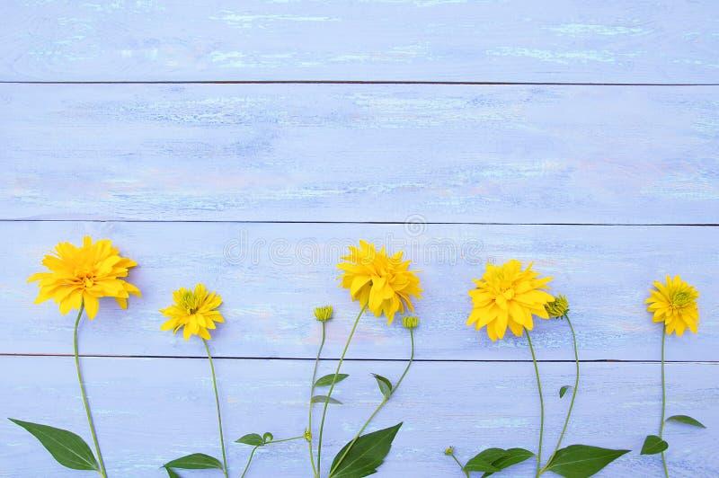 Żółty Heliopsis kwitnie na błękitnym drewnianym tle obrazy royalty free