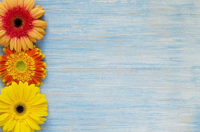 Żółty i czerwony gerbera kwitnie na rocznika błękitnym drewnianym tle, granica projekt obrazy royalty free