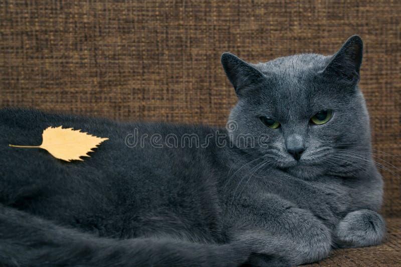 Żółty jesień liść kłama na udostępnieniach szarym kotem zdjęcia royalty free