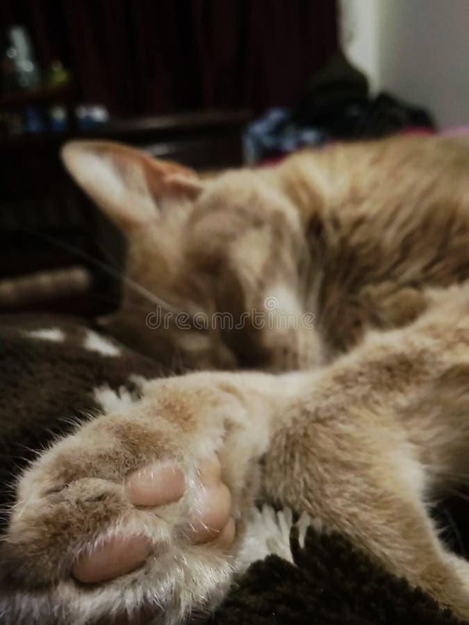 Żółty kot zdjęcie stock
