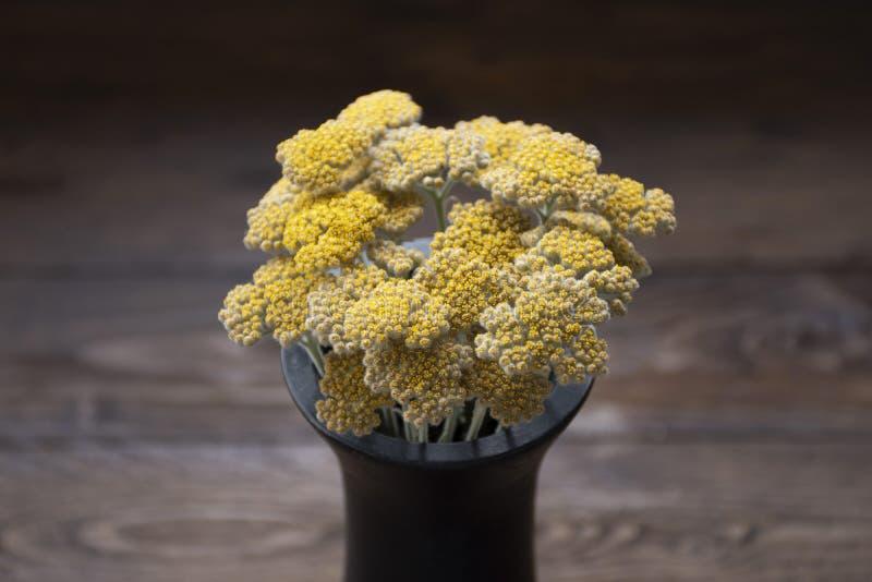 Żółty krwawnik w czarnej wazie na drewnianym tle Bukiet Żółty kwiat w ciemnej wazie zdjęcie stock