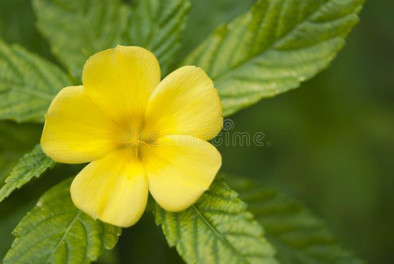 Download Żółty kwiat zdjęcie stock. Obraz złożonej z liść, piękny - 28952744