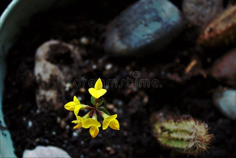 Żółty kwiat i jego zasilamy obrazy royalty free