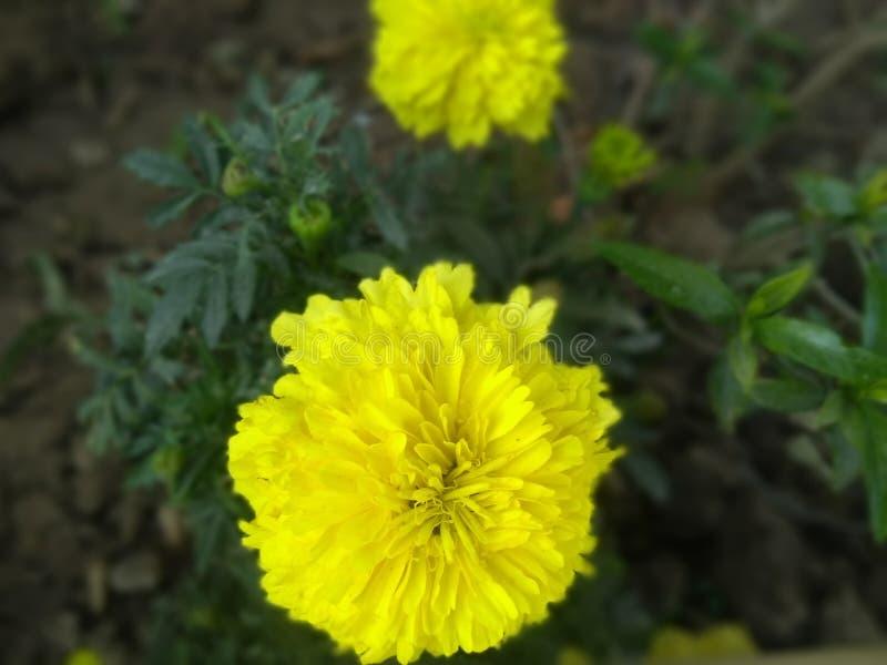 żółty kwiat w parku patrzeje w ten sposób pięknym z zielonymi liśćmi zdjęcia stock
