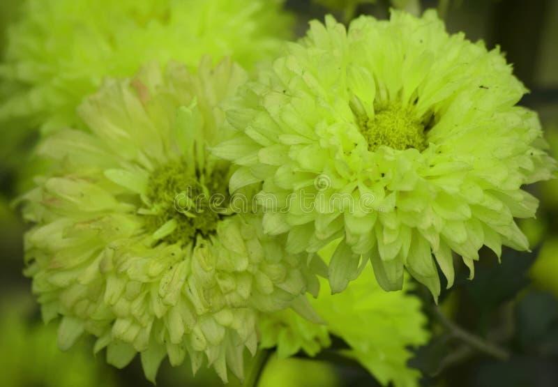 Żółty kwiat z plamy tłem zdjęcie royalty free