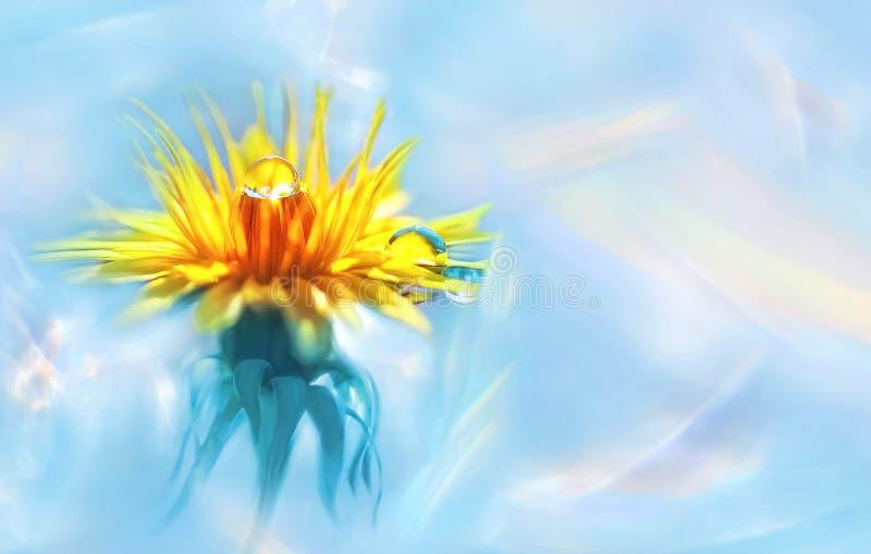 Żółty kwiat z wod kroplami na płatkach Naturalny lato wiosny wizerunek Holograficzny abstrakcjonistyczny tło obrazy royalty free