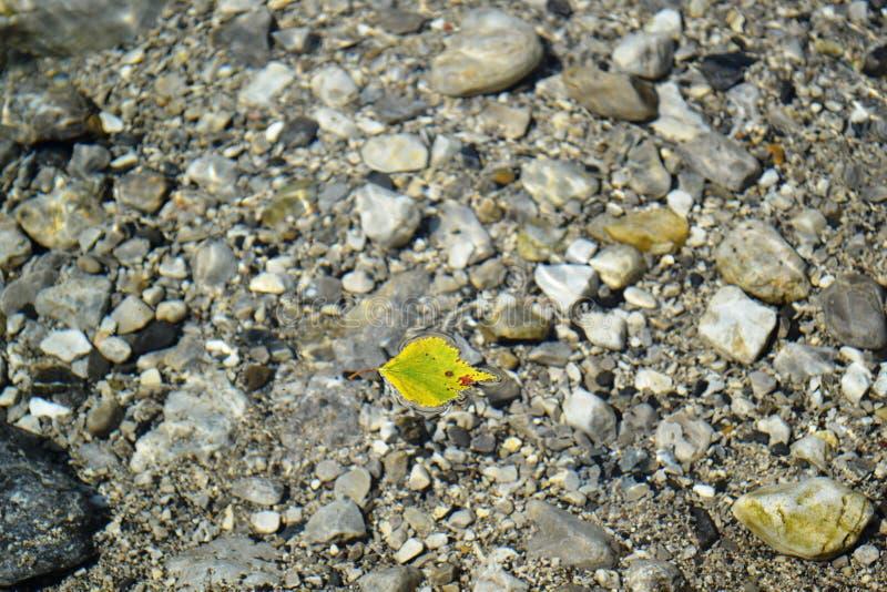 Żółty liść unosi się nad kamieniami halny strumień fotografia royalty free