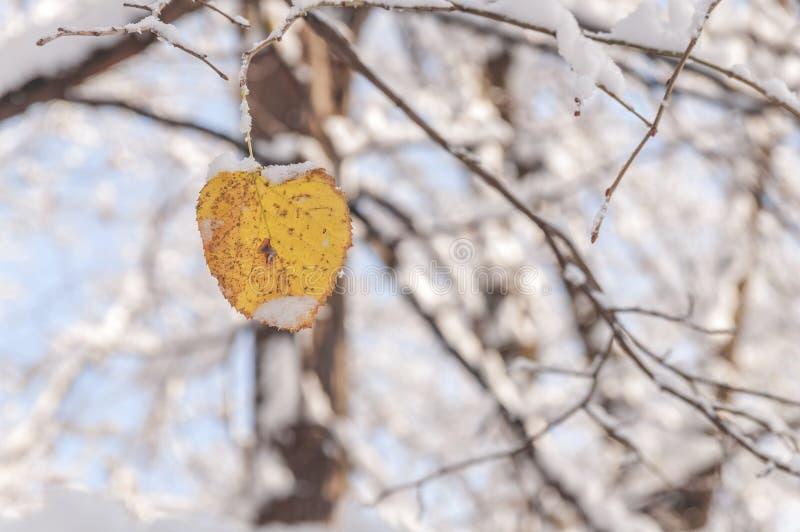 Żółty liść z śniegiem przeciw plamy zimy lasowemu sezonowi obrazy royalty free