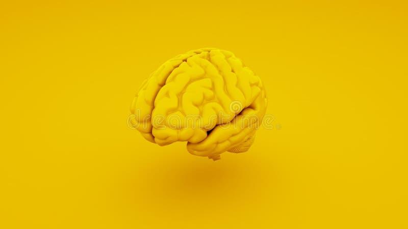 Żółty ludzki mózg, Anatomiczny model ilustracja 3 d zdjęcie stock