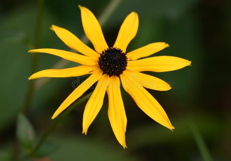Żółty piękności obraz stock