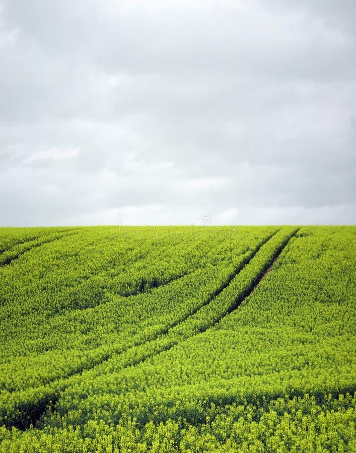 Download Żółty pola zdjęcie stock. Obraz złożonej z gwałt, kolor - 130886