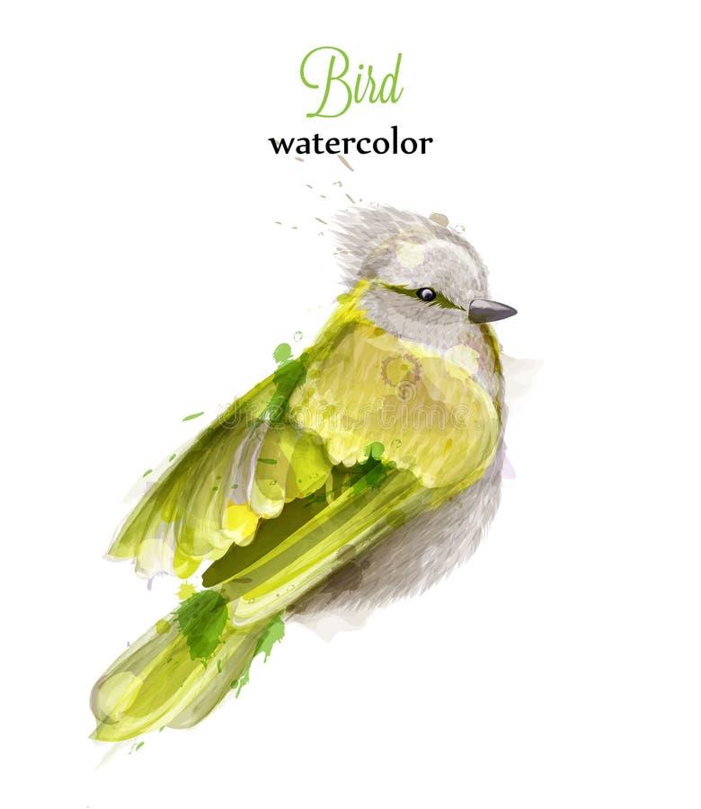 Żółty ptasi akwarela wektor Kolorowe malować stylowe ilustracje ilustracji