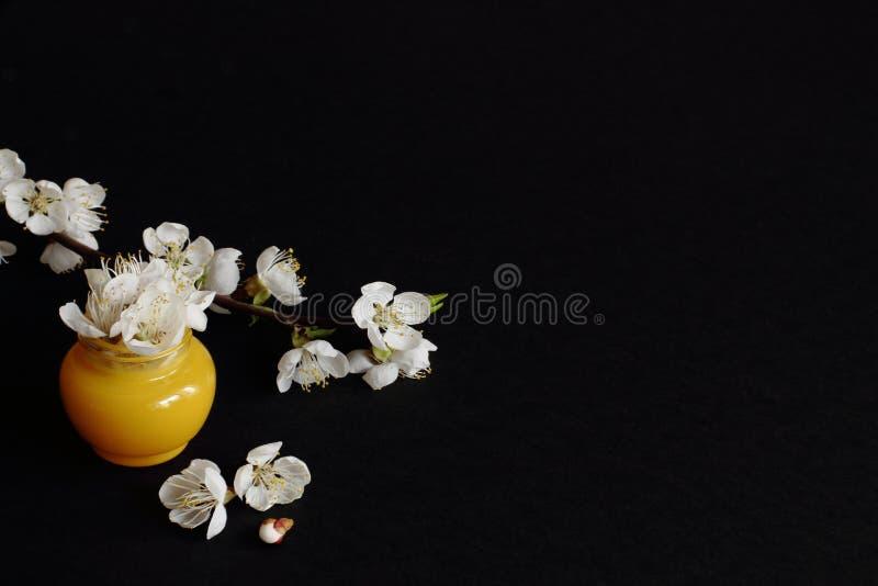 Żółty słój z białymi kwiatami jabłko jako kosmetyczna śmietanka i gałąź jabłko z delikatnymi kwiatami na czarnym tle minimalizm zdjęcia stock