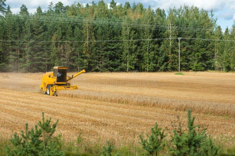 Żółty syndykata żniwiarz w akcji na pszenicznym polu Zbiera? jest procesem zbiera? dojrza?ej uprawy od poly fotografia stock